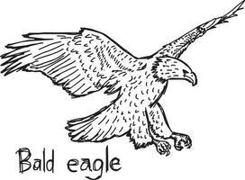bald eagle - vector illustration sketch hand drawn