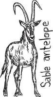 Sable antelope - vector illustration sketch hand drawn