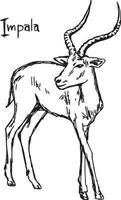 impala - ilustración vectorial boceto dibujado a mano vector