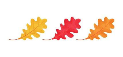 Autumn leaves icons isolated on white background vector