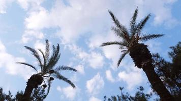 palmiers et beaux nuages blancs au ciel bleu video