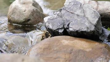 vilda bergsflod som flödar av stenblock och sten forsar video