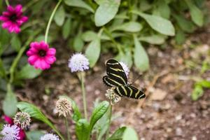 black and yellow butterfly in flower garden photo