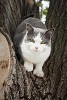 cat in a tree photo
