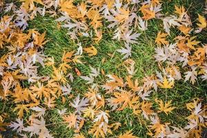 fall leaves on the green grass photo