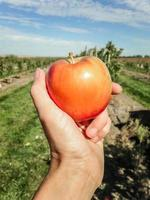 fresh picked apple photo