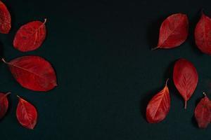 Fondo de otoño de hermosas hojas rojas sobre fondo negro. foto