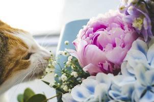 Tricolor domestic cat bites flowers photo