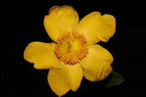 flor de cerca flor de fondo botanicaly foto