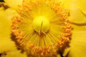 Flower close up blossom background botanicaly photo