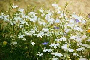 Wildflowers in the rays of the setting sun photo