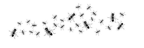 Group of black ants vector