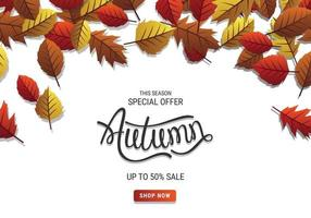 Special Offer Autumn Sale Banner With Leaves And White Background vector