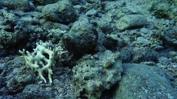 recife de coral e plantas aquáticas no mar vermelho, eilat israel video