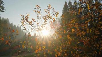 Close up Of Beautiful Autumn Leaves Against Sunset  video