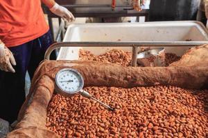 medir la temperatura de los granos de cacao fermentados. foto