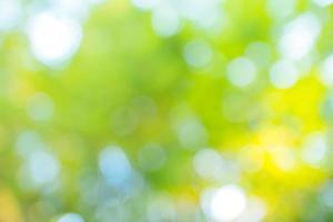 desenfocado fondo verde de la naturaleza. foto