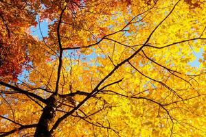 Yellow leaves and branches in Autumn photo