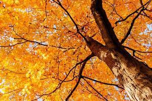 hojas amarillas y ramas en otoño foto