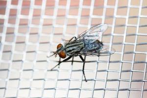 Primer plano de una mosca en la red foto