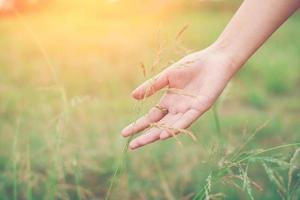 Woman hand touching green grass at meadows. photo