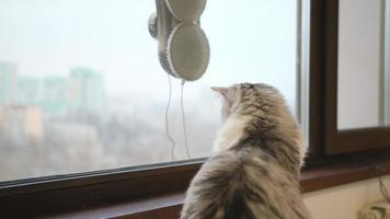 gato mirando a la lavadora robot. robot lava las ventanas de los rascacielos. concepto de robot limpiador de ventanas. tecnologías modernas foto