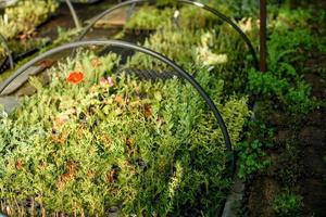 un pequeño invernadero para el cultivo de plantas, arbustos y flores foto