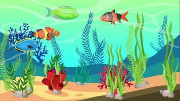 peixes coloridos estão vivendo no fundo do mar video