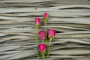 Pink roses flat lay on dry palm leaves background. photo