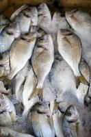 Raw Fresh Seafood Fishes on Market photo