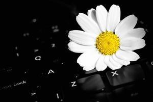 fauna flor margarita y computadora portátil foto