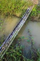 troncos de eucalipto colocados para puente temporal foto