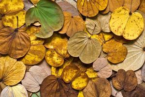 Colorful of leaves in Autumn photo