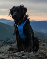 Black Dog on Mountain Summit photo