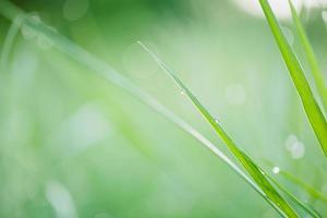 gota de agua sobre la hierba foto