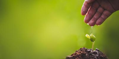 Hand is growing and nurturing sprouts of tree photo