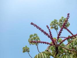 Blue sky, branches of a tropical tree with red flowers, background photo