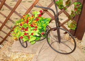 pequeño triciclo decorativo con cesto y cerezo artificial foto