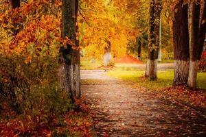 hermoso parque otoñal, senderos entre árboles amarillos bajo el sol foto
