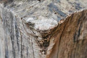Texture of old tree and stump as a background image photo