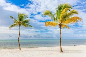 cocotero en una playa de arena blanca. foto