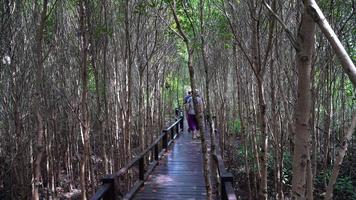senior couple walking on trail in mangrove forest video