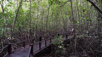 senior asian woman walking on trail in mangrove forest video