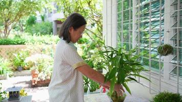 senior asian woman decorating house with plant in pot video