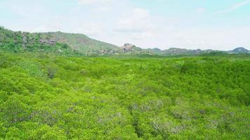 vue d'en haut de la forêt de mangrove en pays tropical video