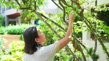 senior asian woman hanging small plant on big tree to decorate garden video