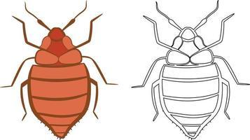 Bedbug or Cimex lectularius Vector Illustration