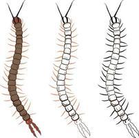 Centipede or Chilopoda Vector Illustration