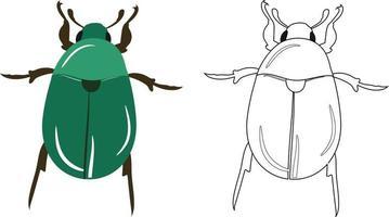 Beetle or Coleoptera Vector Illustration Outline