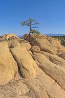 árbol solitario en un acantilado del desierto foto